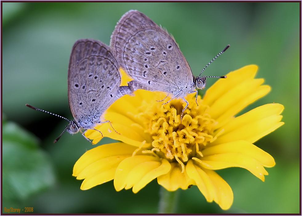 photoblog image Lurv on the flower