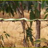 Uses for a Barbed Wire Fence #13