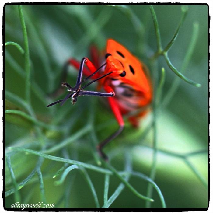 photoblog image Odorous Harmony