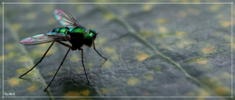 photoblog image Guest Gardener